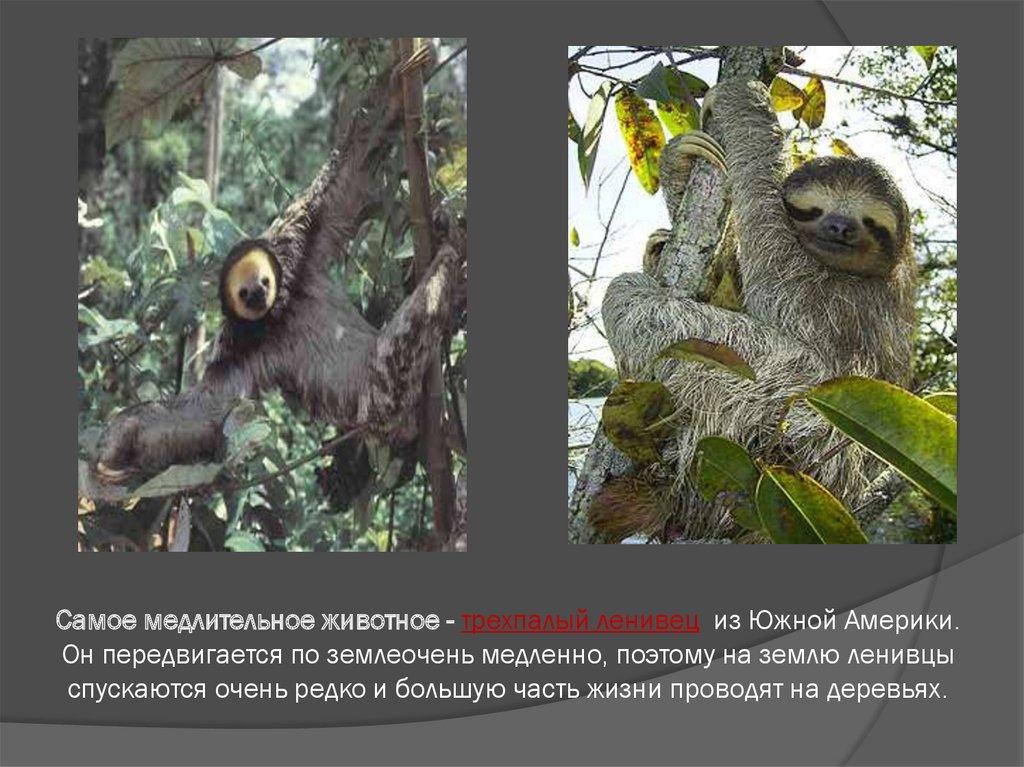Удивительное в мире животных - презентация онлайн  Самое Маленькое Животное в Мире