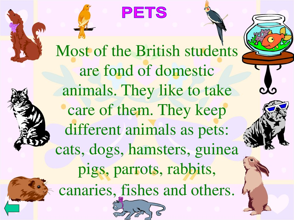Most of the British students are fond of domestic animals. They like to take care of them. They keep different animals as pets: