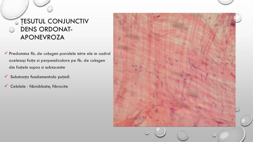 grupuri de celule cartilaginoase ale țesutului conjunctiv)