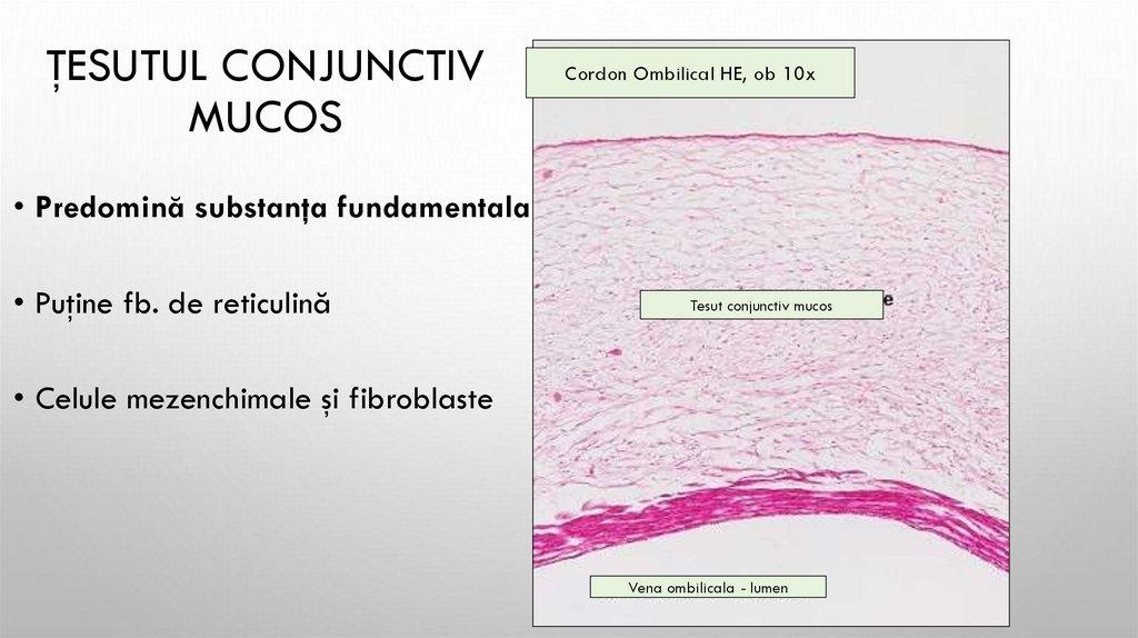 grupuri de celule cartilaginoase ale țesutului conjunctiv